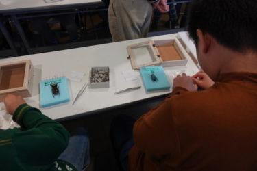 ファーブル昆虫館の標本教室レベルアップコースへ行ってきた