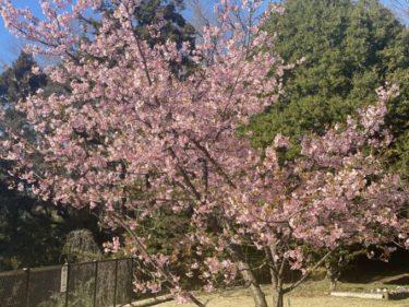 新型コロナウイルスで忘れていませんか?春が来ましたよ。開花予想すら無かった2020年。